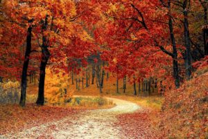 The Best Trees to Plant for Fall Colors